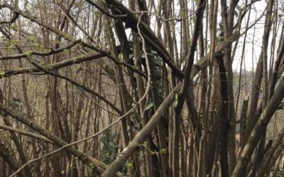 Resilienza di un ramo spezzato
